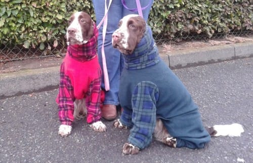 Big Onesie News from Crufts Dog Show