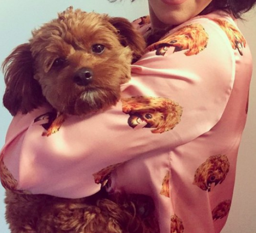 Dog Pyjamas and celebrity onesies