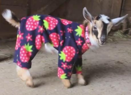 Cute Animal Onesie Pyjamas