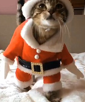 Even cats get their Christmas presents early