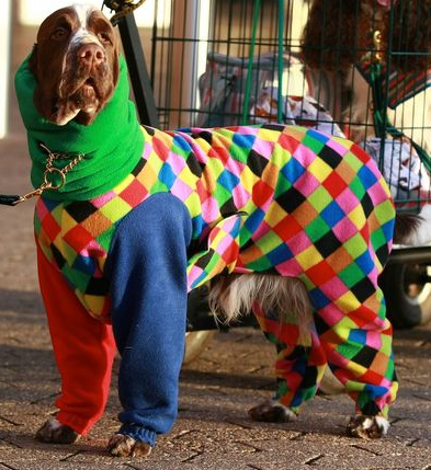 Surprise Onesie Event at Crufts