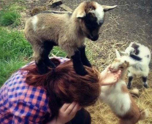 Easter time Goat Cuddler